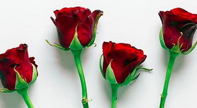 Roses-1200x660