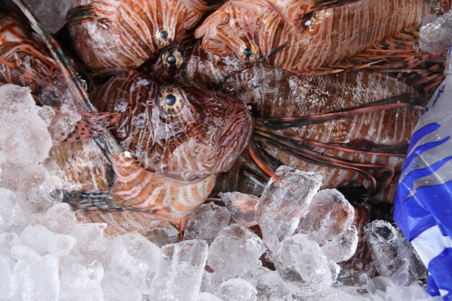 Michael's On East Competes in REEF's 2018 Lionfish Derby Series