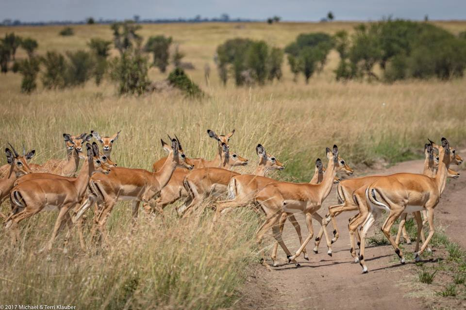 Animals Running